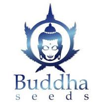 - Buddha Seeds Mix