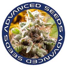 - Advanced Seeds Coleccionista