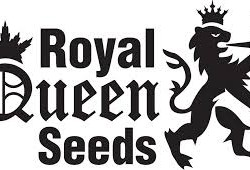 - Royal Queen Auto