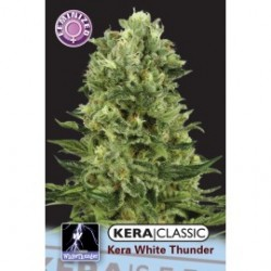 kera_white_thunder_1