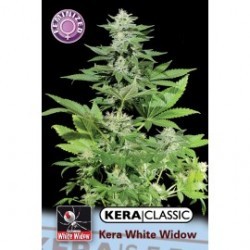 kera_white_widow_1_1